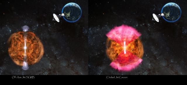 Scenari possibili dopo la kilonova (Immagine NRAO/AUI/NSF: D. Berry)