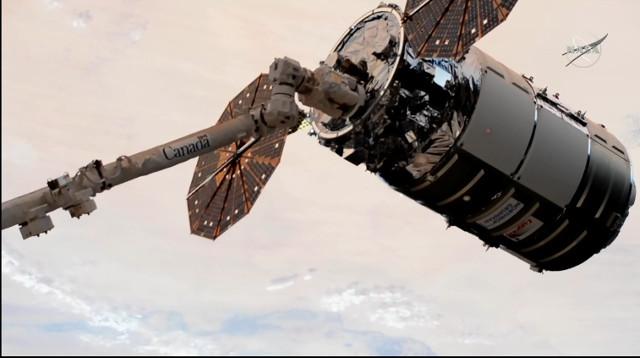 Il cargo spaziale Cygnus Kalpana Chawla catturato dal braccio robotico Canadarm2 (Immagine NASA TV)